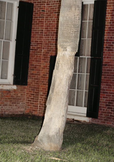 Ashton Villa damaged tree